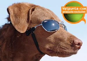 gorras y gafas para perros