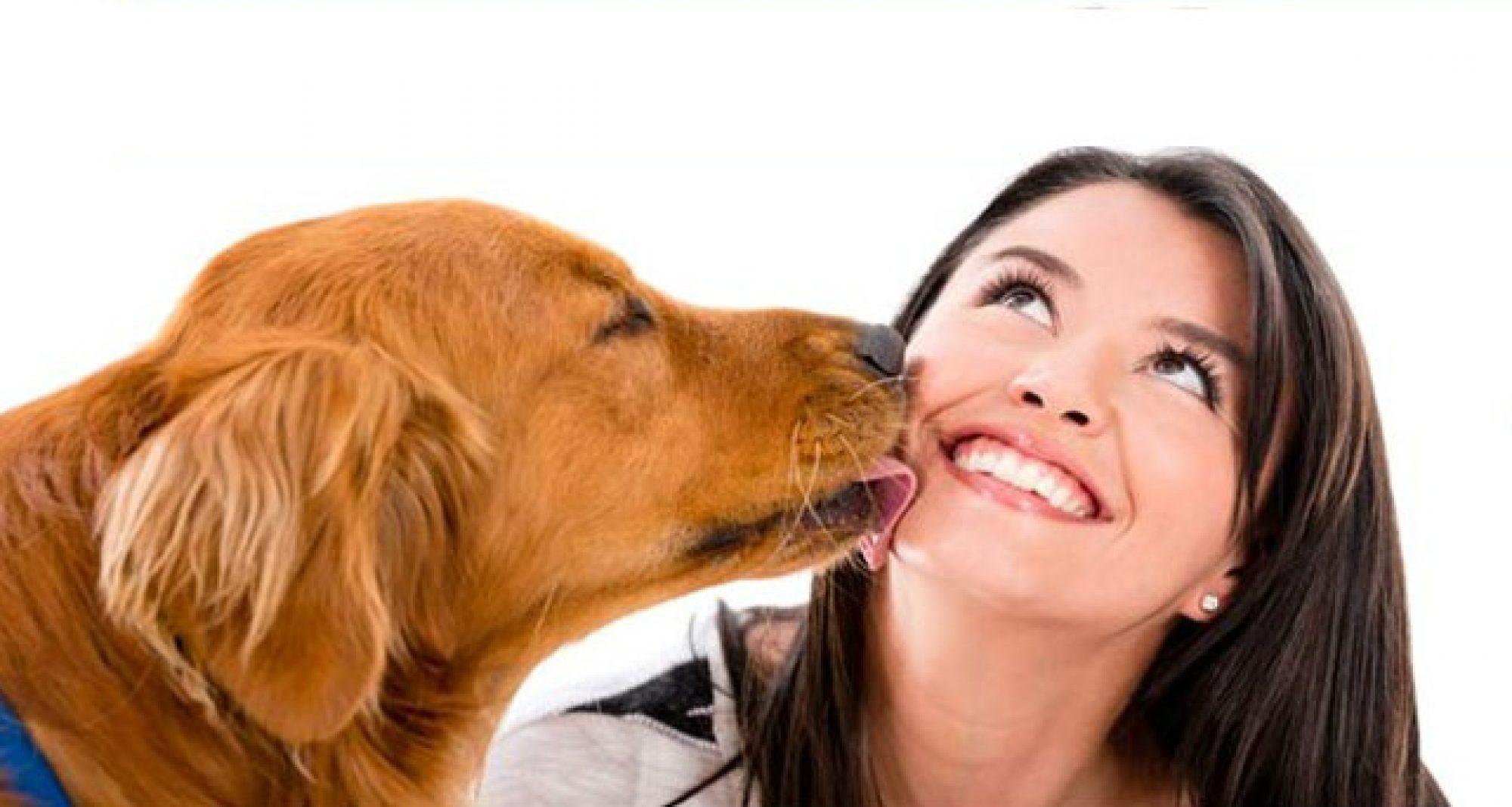 Tienda Online Para Mascotas
